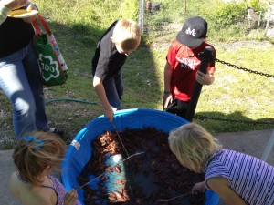 A kiddie pool full of crawfish is a kid magnet!